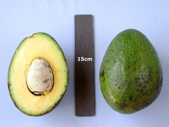 Reed - Avocado